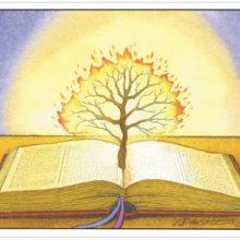 7 Semaines pour une vie nouvelle à Siloé,  Qui me trouve a trouvé la vie Proverbes 8, 35